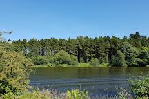 Portglenone Forest, Portglenone, United Kingdom