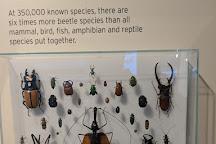 Missoula Insectarium, Missoula, United States