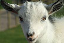 Chew Valley Animal Park, Chew Magna, United Kingdom