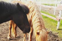Jau Jau Icelandic Horses, Mantsala, Finland