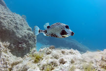 Dressel Divers, Bavaro, Dominican Republic