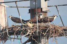 Birding By Boat on the Osprey, Cape May, United States