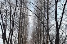 Mulhyanggi Arboretum, Osan, South Korea