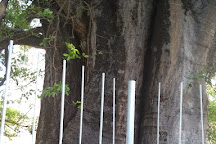 Baoba do Poeta, Natal, Brazil