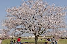 Sanrizuka Sakura no Oka, Narita, Japan