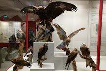 Natur-Museum Luzern, Lucerne, Switzerland