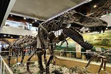 Paleozoological Museum of China, Beijing, China