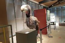 Museum Dpartemental du Var, Toulon, France