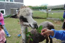 Abrams Animal Farm, Block Island, United States