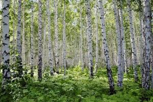 CO Lumber Specialties