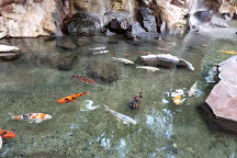Wildlife Habitat, Las Vegas, United States