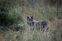 Wolf Education and Research Center, Winchester, United States