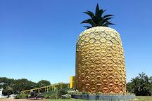 The Big Pineapple, Bathurst, South Africa