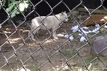 Ochsner Park Zoo, Baraboo, United States