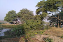 Khijadiya Bird Sanctuary, Jamnagar, India