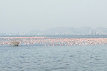 Thane Creek Flamingo Sanctuary, Navi Mumbai, India