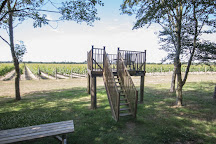 Tinwood Estate Vineyard, Chichester, United Kingdom