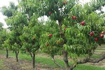 Appleshack at Glenbernie Orchard, Darkes Forest, Australia