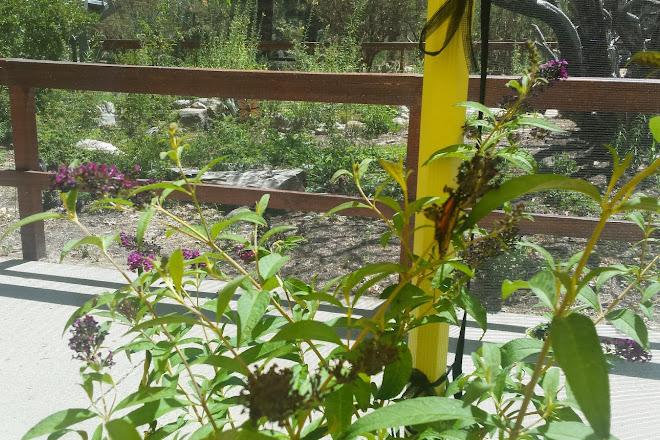 Visit Idyllwild Nature Center on your trip to Idyllwild