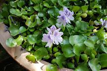 Sierra Water Gardens, Reno, United States