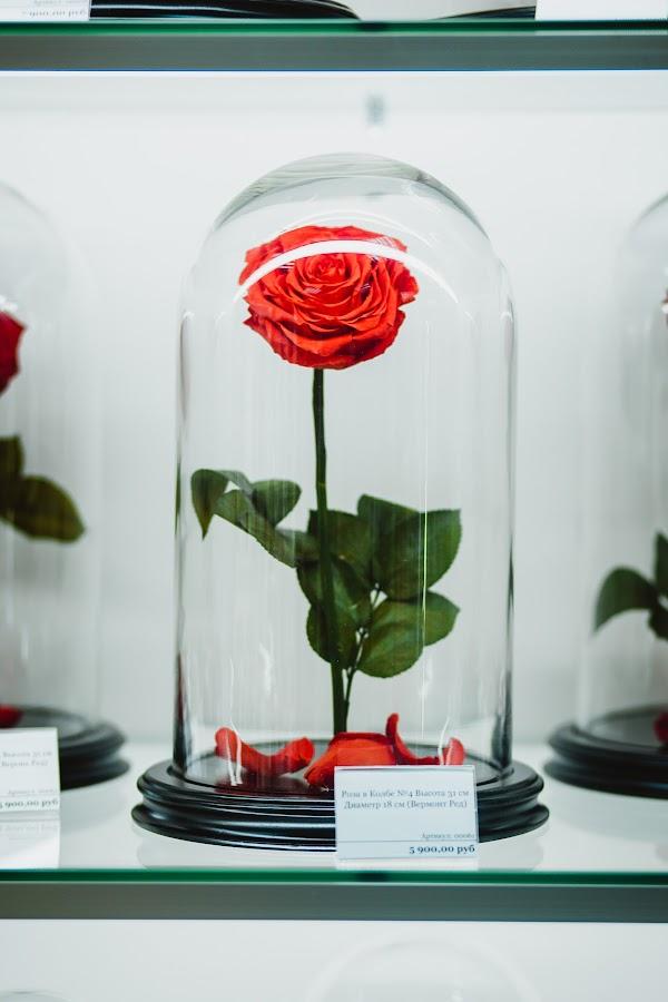 Цветов, магазин цветы вермонт сайт
