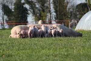 La Touche Guillet - Ferme DUBOURG - Vente directe Porcs Mayenne (53)