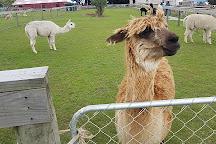 Glenorchy Animal Experience, Glenorchy, New Zealand