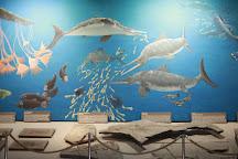 Urwelt Museum Hauff, Holzmaden, Germany