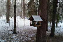 Chernyayevsky Forest, Perm, Russia
