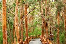Bosque de Los Arrayanes, Villa La Angostura, Argentina