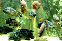 Aquarium Les 3 Vagues, Ottrott, France
