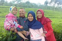 Agrowisata Tambi, Wonosobo, Indonesia