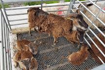 Atlantic Sheepdogs, Grange, Ireland