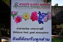 Suanbua Maesa Orchid, Chiang Mai, Thailand