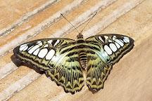 Butterfly Wonderland, Scottsdale, United States