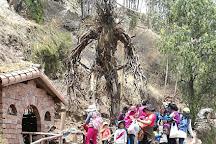 Huasao Bosque de los Ents, del Senor de los Anillos, Oropesa, Peru