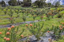 No Ka Oi Protea Farm, Kula, United States