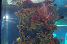 Electric City Aquarium & Reptile Den, Scranton, United States