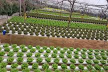Genting Strawberry Leisure Farm, Genting Highlands, Malaysia