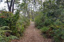 Koala Reserve Mangrove Boardwalk, Lemon Tree Passage, Australia