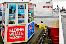 Whales of Iceland, Reykjavik, Iceland