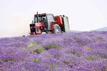 Young Living Lavender Farm and Distillery, Mona, United States