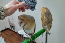 Owl Cafe Mohumohu, Shinjuku, Japan