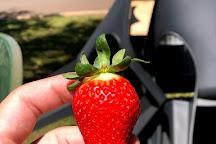 Shaylee Strawberries, Atherton, Australia
