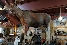 Aland Hunting & Fishing Museum