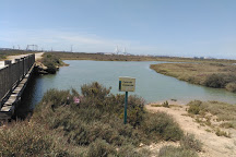 Parque Metropolitano Marisma de los Torunos y Pinar de la Algaida, El Puerto de Santa Maria, Spain