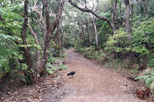 Noosa National Park, Noosa, Australia