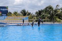 Dolphin Discovery Playa Del Carmen Maroma, Playa del Carmen, Mexico