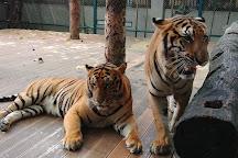 Tiger Kingdom - Chiang Mai, Mae Rim, Thailand