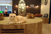 Cat Cafe Mocha, Ikebukuro, Toshima, Japan